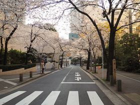 六本木の隠れ花見スポット「桜坂」と旧霊南坂教会痕跡めぐり