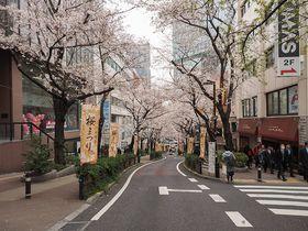 渋谷駅前にも桜スポットあり!渋谷桜丘のさくら坂と界隈坂道めぐり