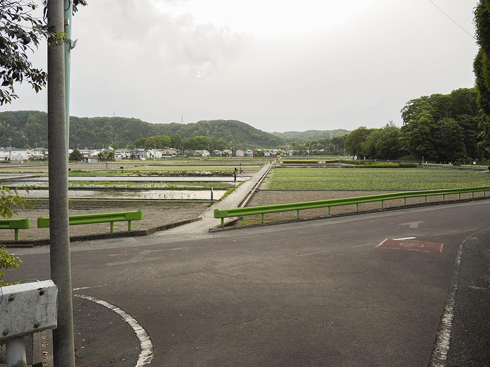 季節折々の水田風景も楽しめる!東京・羽村市の雨乞坂と界隈名所巡り
