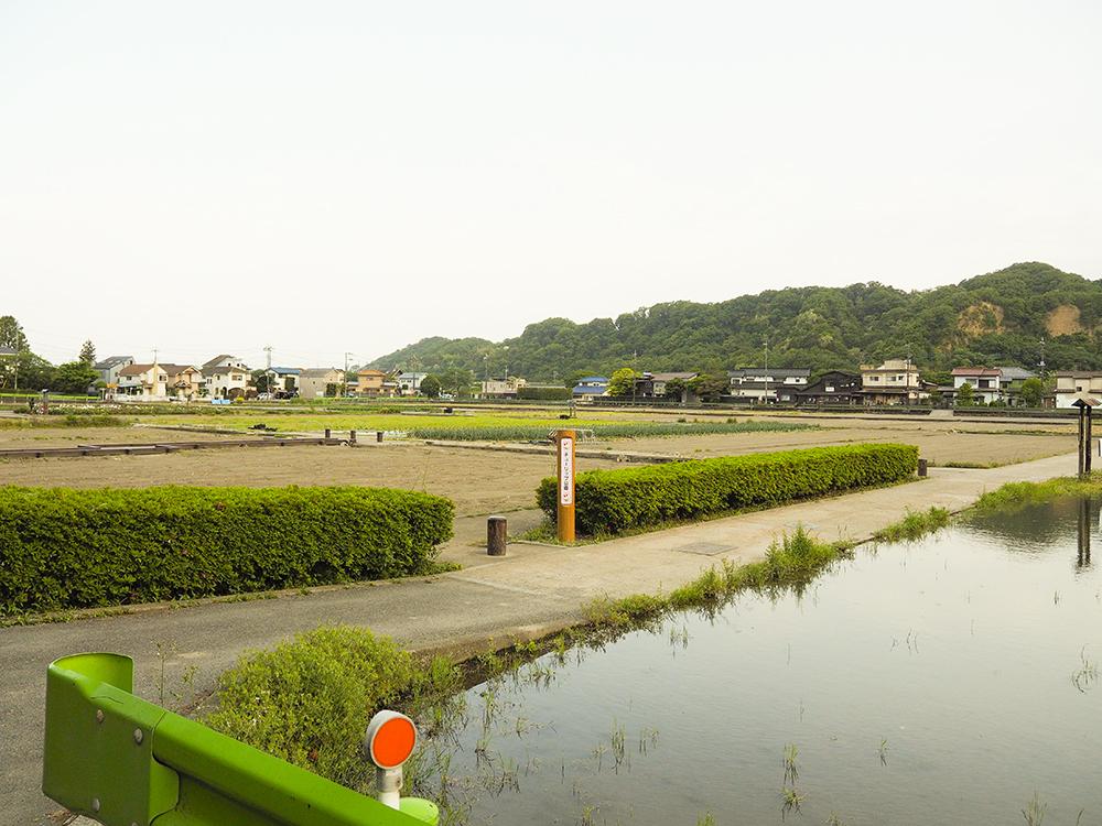 羽村市内で唯一の水田地帯