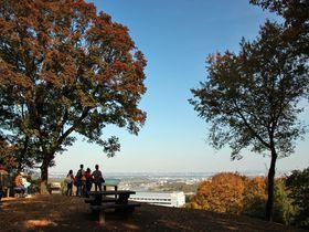 素朴な紅葉が魅力!「神奈川県立七沢森林公園」で晩秋ハイク