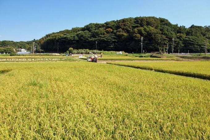 水田の広がる長閑な田園風景は日本の原風景!