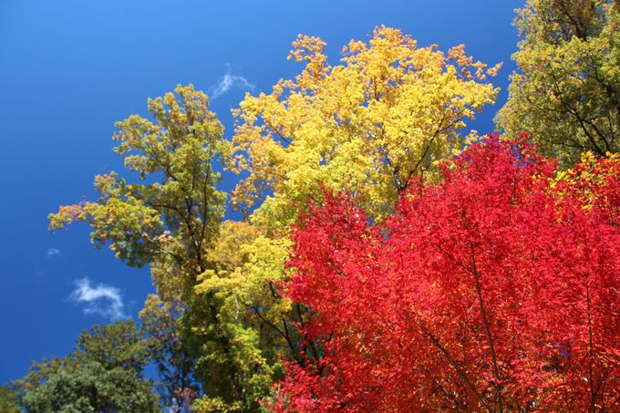 「秋川渓谷 瀬音の湯」敷地内の紅葉は特に見事