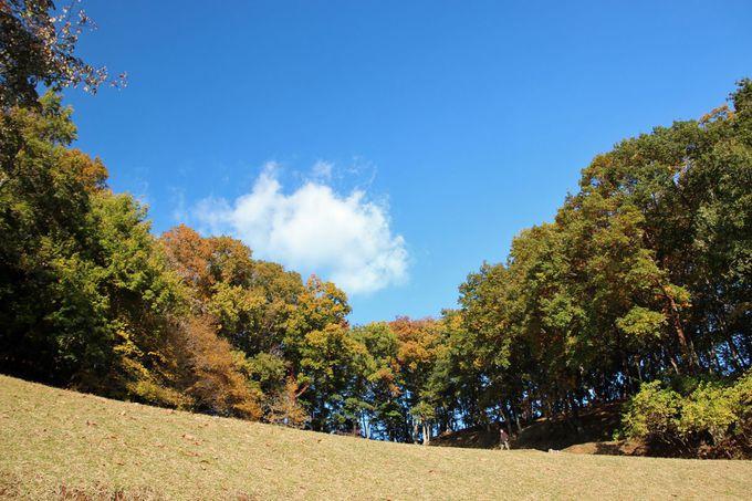 豊かな自然に恵まれた森林公園