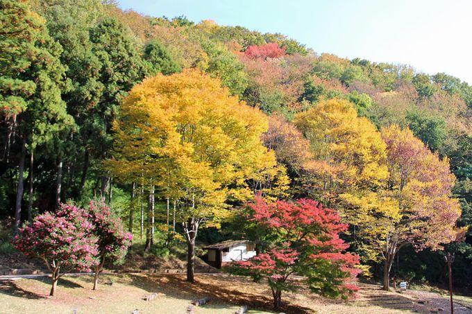 雑木林の紅葉の素朴な美しさを楽しもう