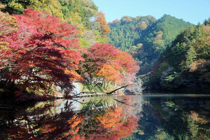 紅葉に染まる鎌北湖に出かけてみよう