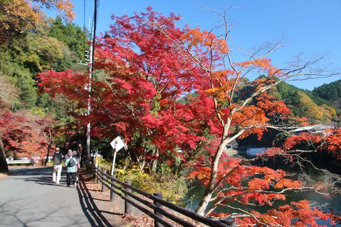 湖北岸を歩いて紅葉の景観を堪能