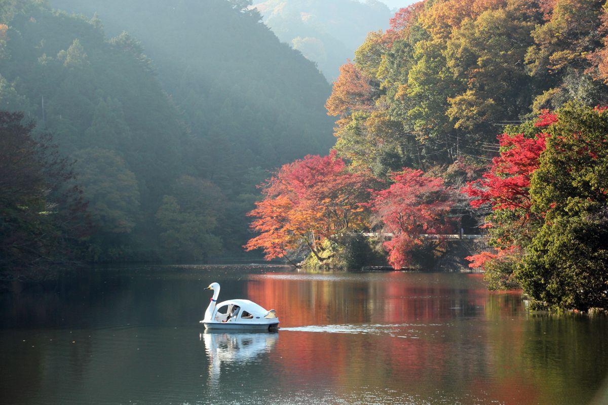 カップルで訪れたらボートを楽しむのもお勧め