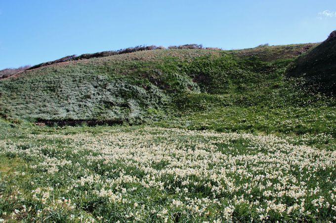 水仙の咲く頃に訪ねたい、冬の伊豆旅