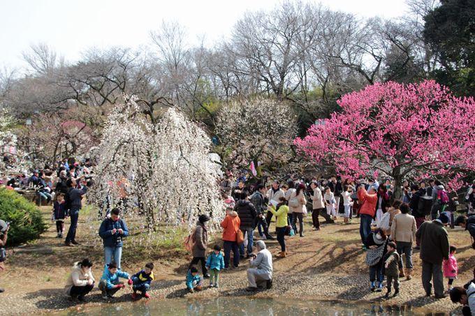 横浜有数の名所!「大倉山公園梅林」「三溪園」で観梅散歩