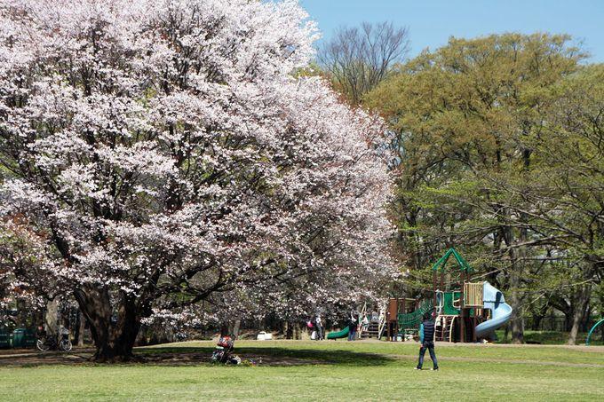 「わんぱく広場」で子どもたちの遊ぶ姿を見守りながらお花見