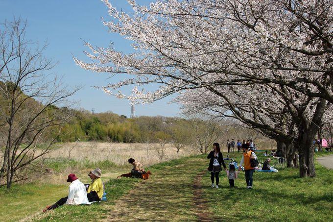 のんびりと歩いて桜並木を満喫