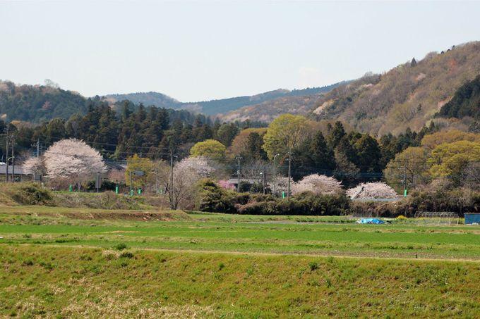 春景色の山々にも注目