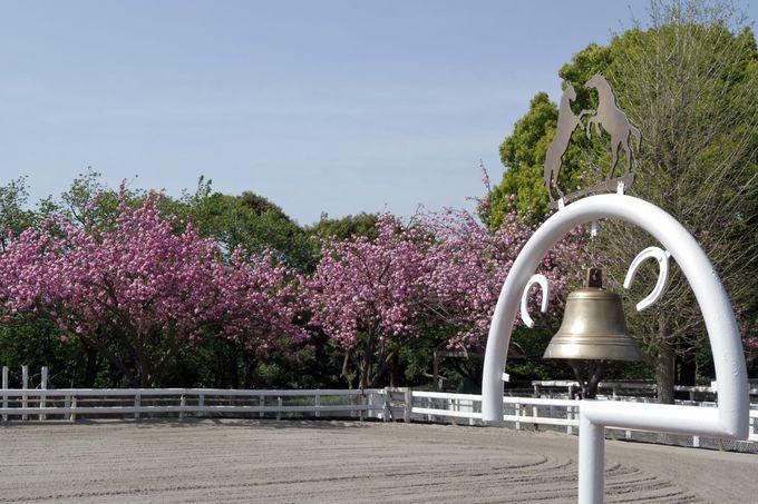 根岸競馬記念公苑も見ておこう!ポニーに会えるかも!