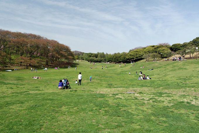 まずは見渡す限りに広がる芝生広場の開放感を楽しもう!