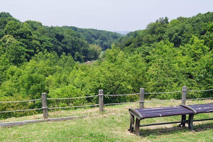 自然溢れる、広大な茅ヶ崎里山公園