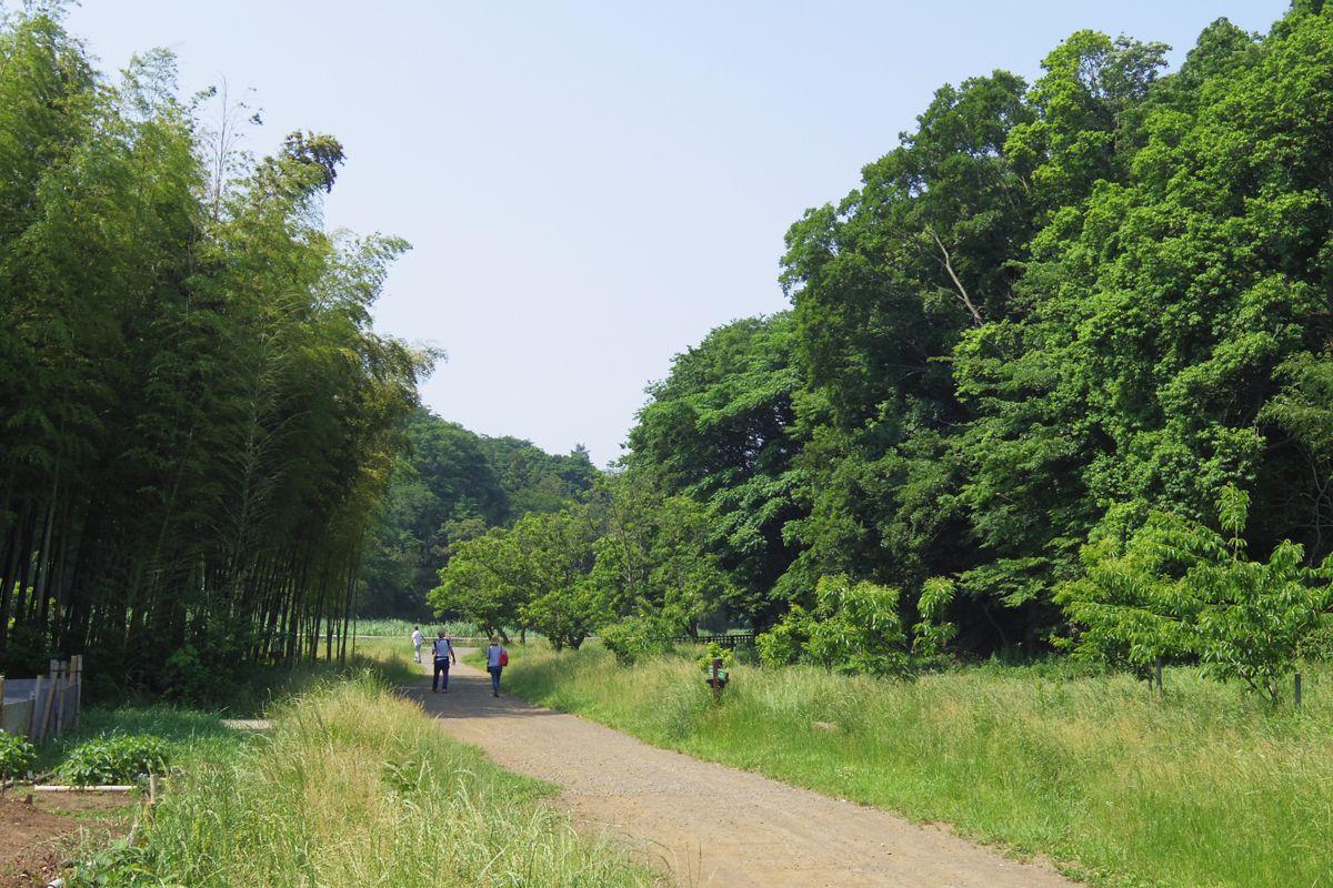 古き佳き日本の風景、「谷戸」を歩こう