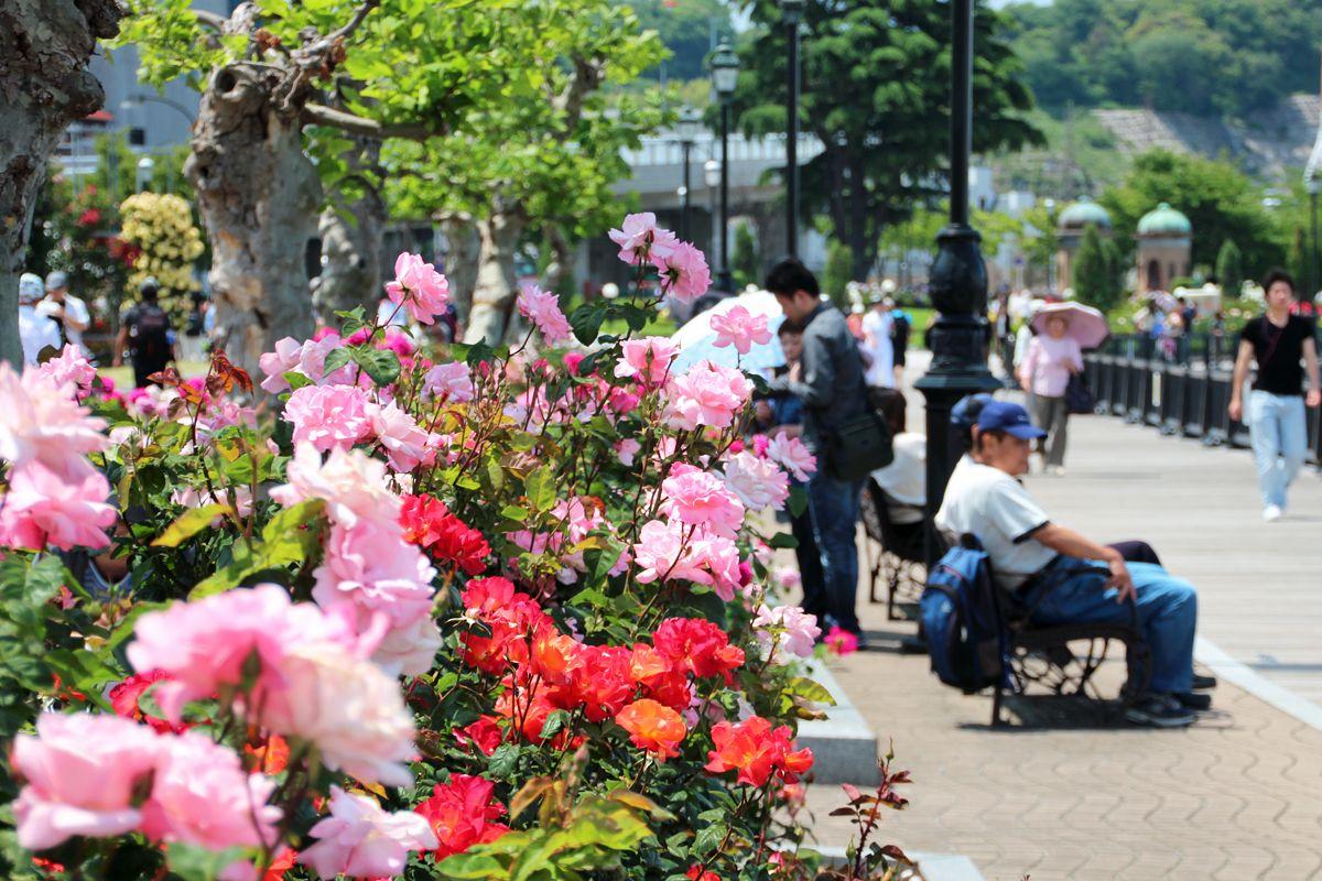 約2000株のバラがフランス式花壇を彩る!