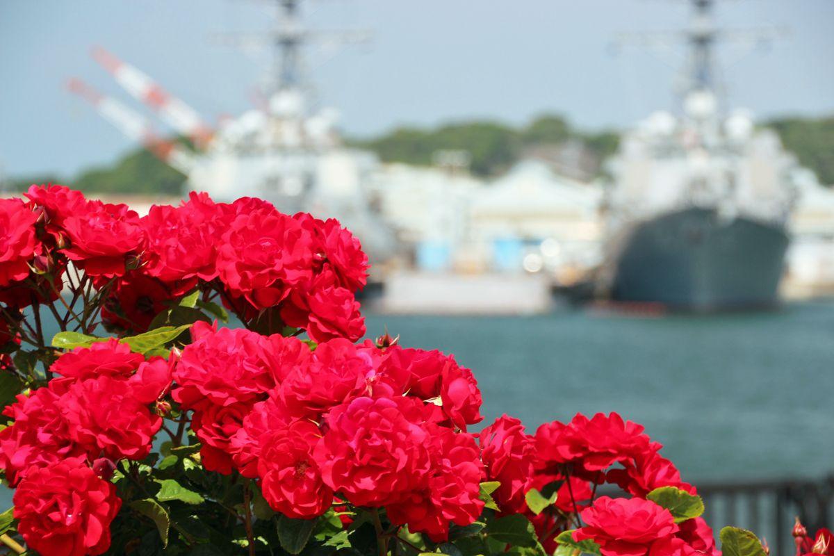 バラと艦船の競演!米軍施設を臨む横須賀市「ヴェルニー公園」