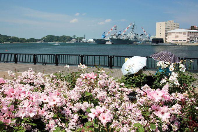 バラと艦船との競演は必見!フォトジェニックな景観を楽しもう