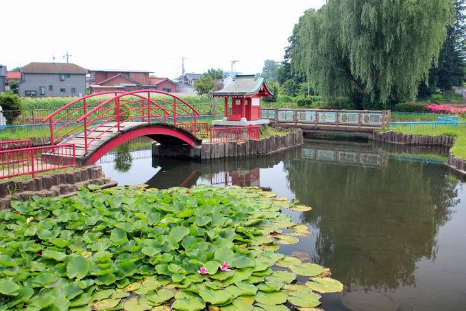 東京近郊で有数の名所「北山公園」で花菖蒲の魅力を!