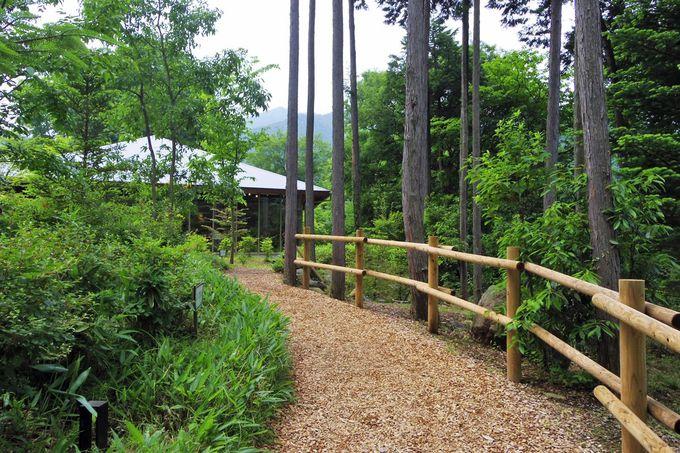 「秋川渓谷 瀬音の湯」も緑の直中!