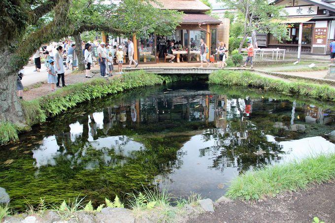 「忍野八海」の神秘性がよく感じられる「湧池」と「銚子池」