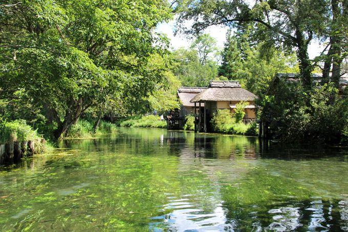 大王わさび農場の美しい湧水と蓼川河岸の三連水車は必見!