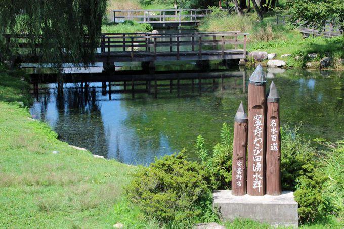 安曇野わさび田湧水群「憩いの池」は穴場の観光スポット