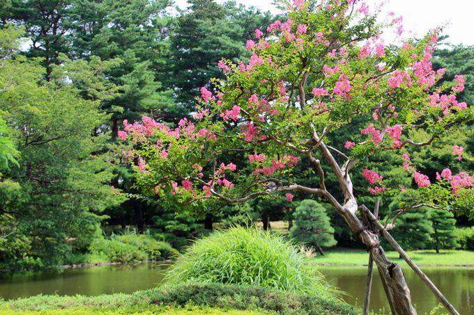 3.神代植物公園/調布市