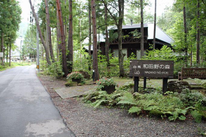 「和田野の森」へ足を延ばして樹林散歩を楽しもう