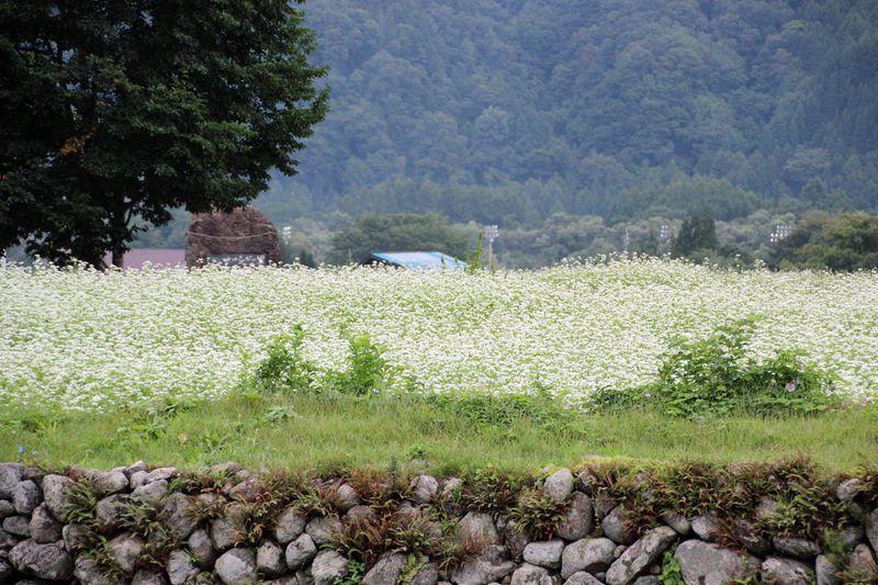 田園と樹林地の散策を楽しもう!長野県白馬村の夏の終わり