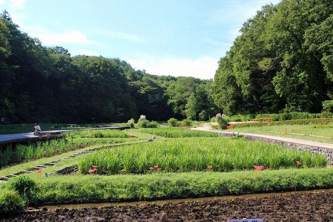 里山風景の残る公園で、静けさに満ちた時間を過ごそう