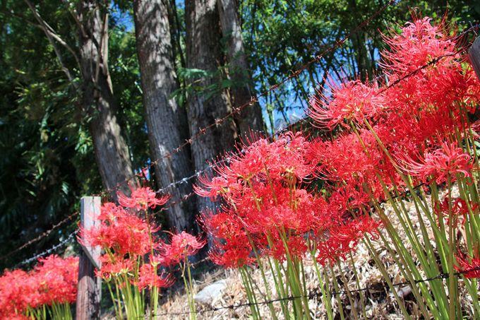 初秋の「根搦前水田」でのんびりと散策を楽しもう!