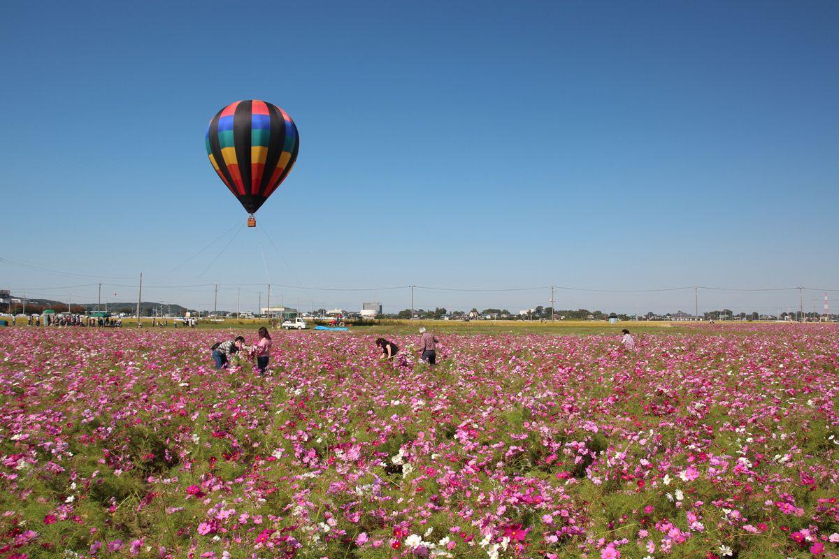 枝豆狩りや熱気球体験も人気!イベントを楽しもう