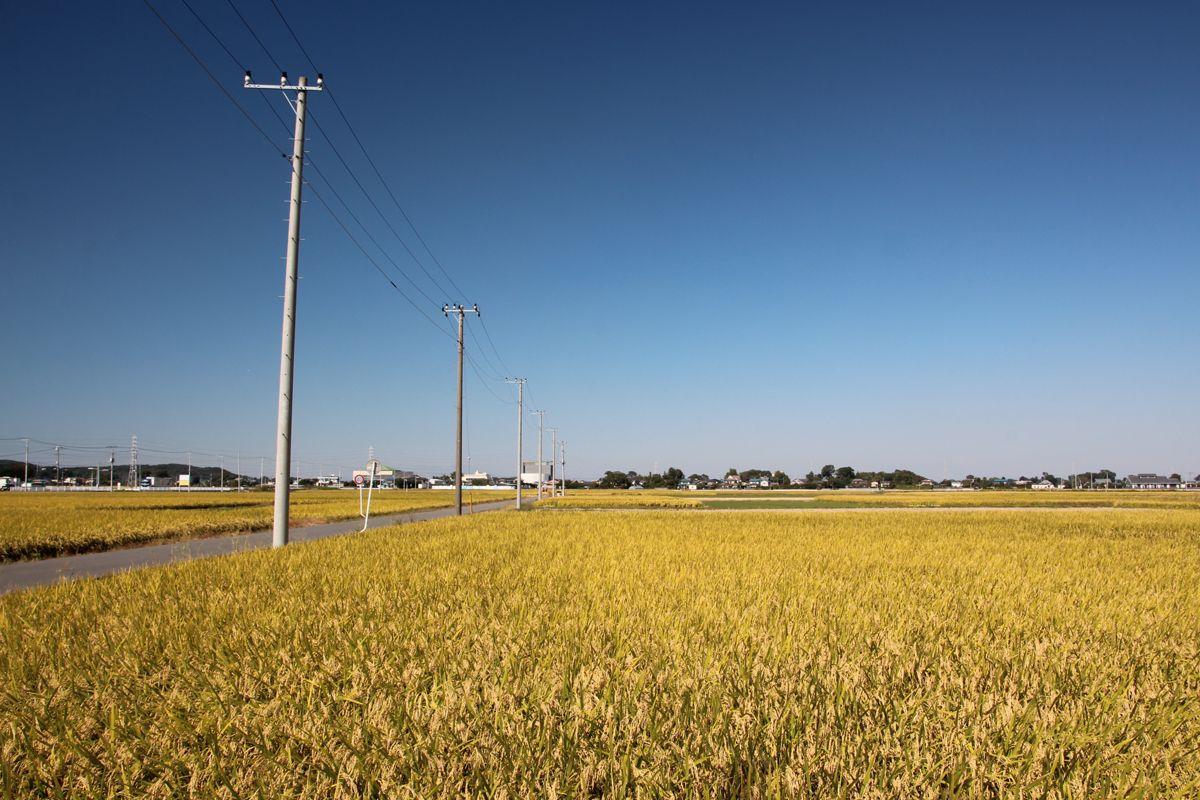 周辺の長閑な田園風景へ足を延ばすのも楽しい