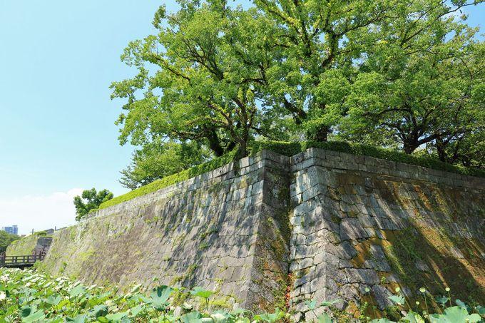 石垣と堀が往時の面影を残す「鶴丸城跡」