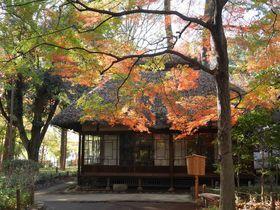 世田谷区に残る武蔵野の原風景!紅葉の「都立蘆花恒春園」
