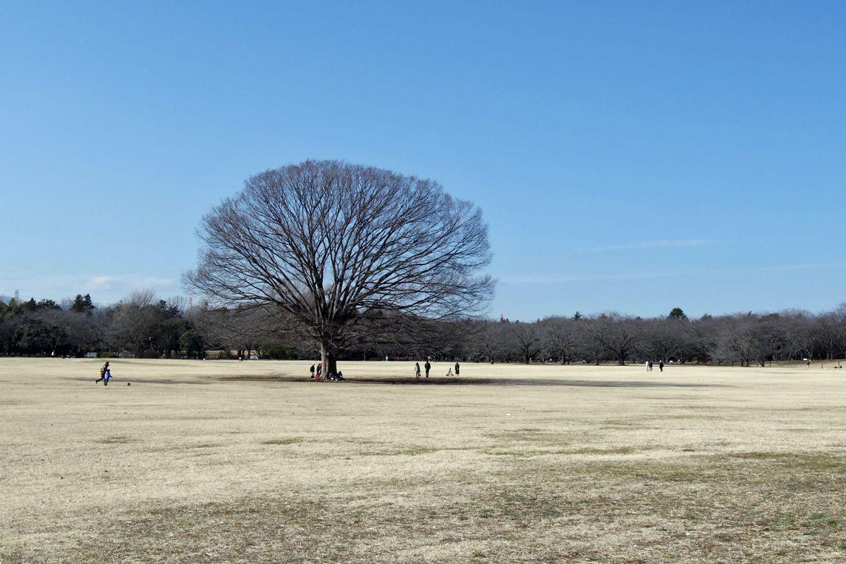 冬枯れの樹木の姿も素敵!この季節の風情を楽しもう