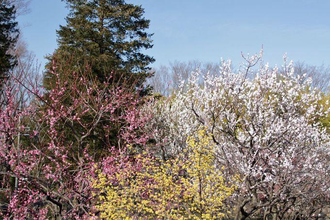 梅の花以外にも、季節を感じさせる花を楽しもう!