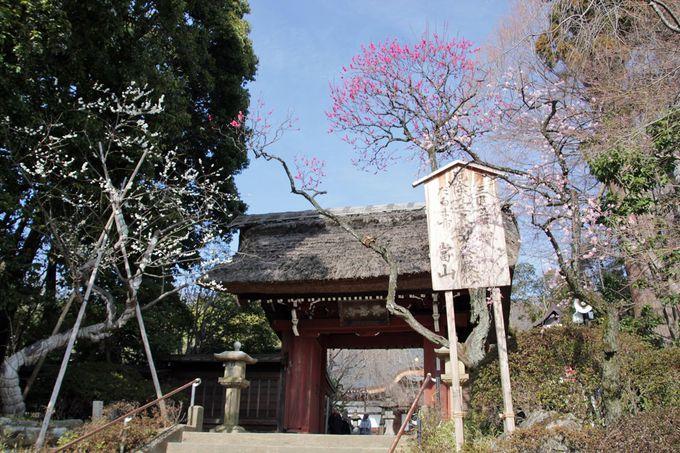 深大寺への参拝や、周辺の散策もお勧め!