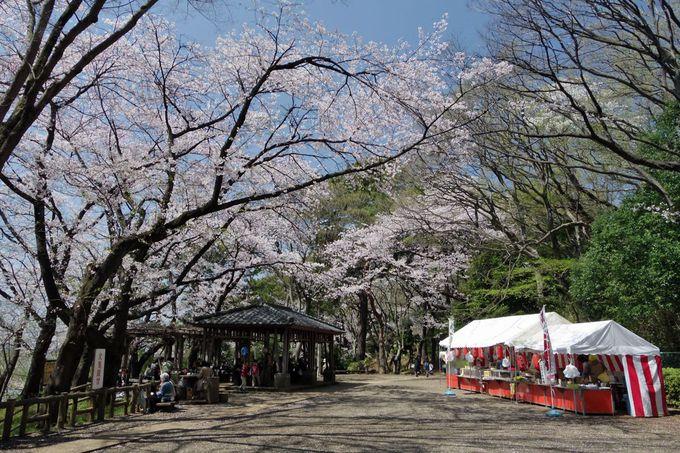 多摩川台公園は地元で知られたお花見スポット