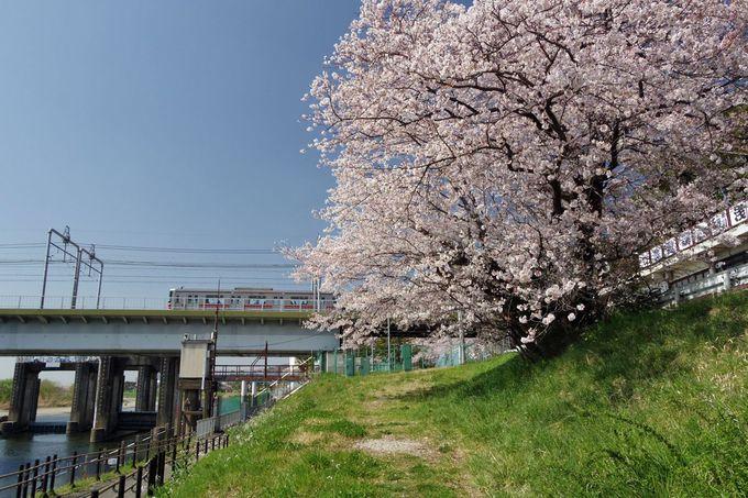 多摩川に沿って春散歩を楽しもう