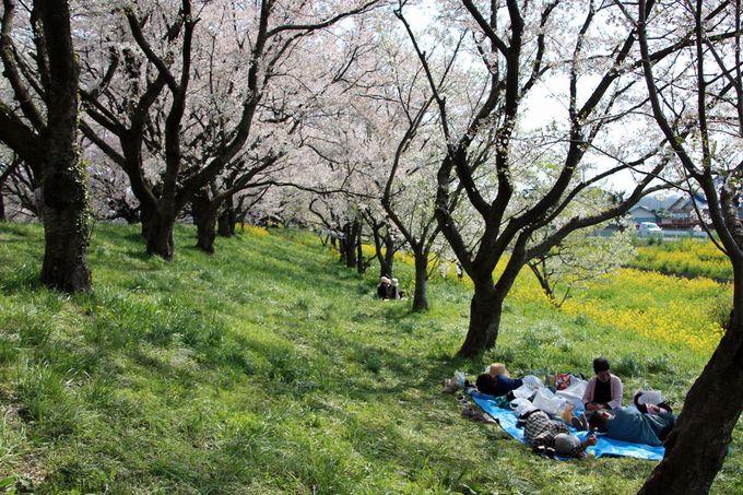 お弁当を持って春のピクニック感覚で訪れるのがお勧め