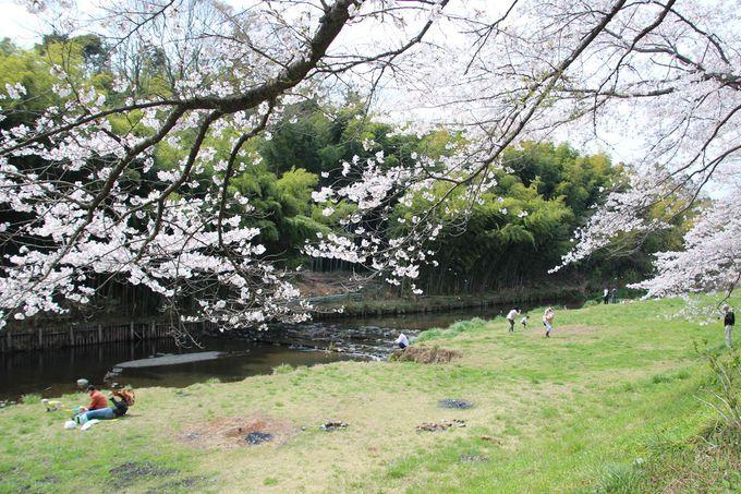 花見を兼ねた春の行楽気分で行こう!