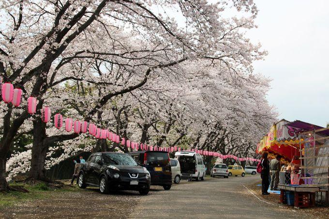 緑濃い景観の中、河岸に並ぶ桜が美しい!