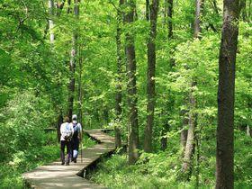 新緑の雑木林散策でリフレッシュ!八王子市「都立小宮公園」