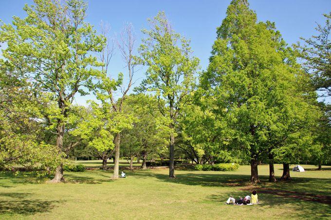 中世の山城跡を公園にした「大庭城址公園」