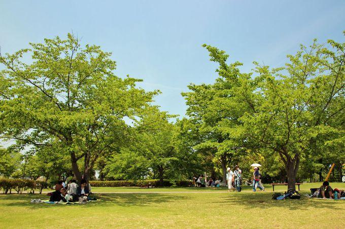 平成の森公園で初夏の行楽を楽しもう!