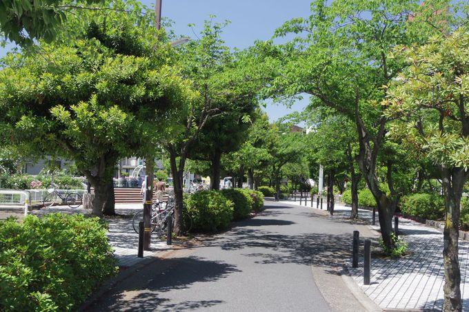 「青和ばら公園」をメインに初夏の町散歩